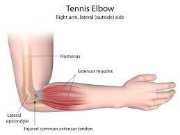 Elbow anatomy simple